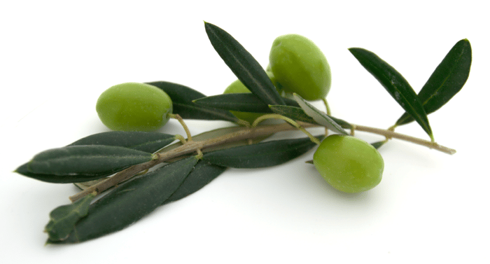 EBV and Olive Leaf Extract | Kasia Kines
